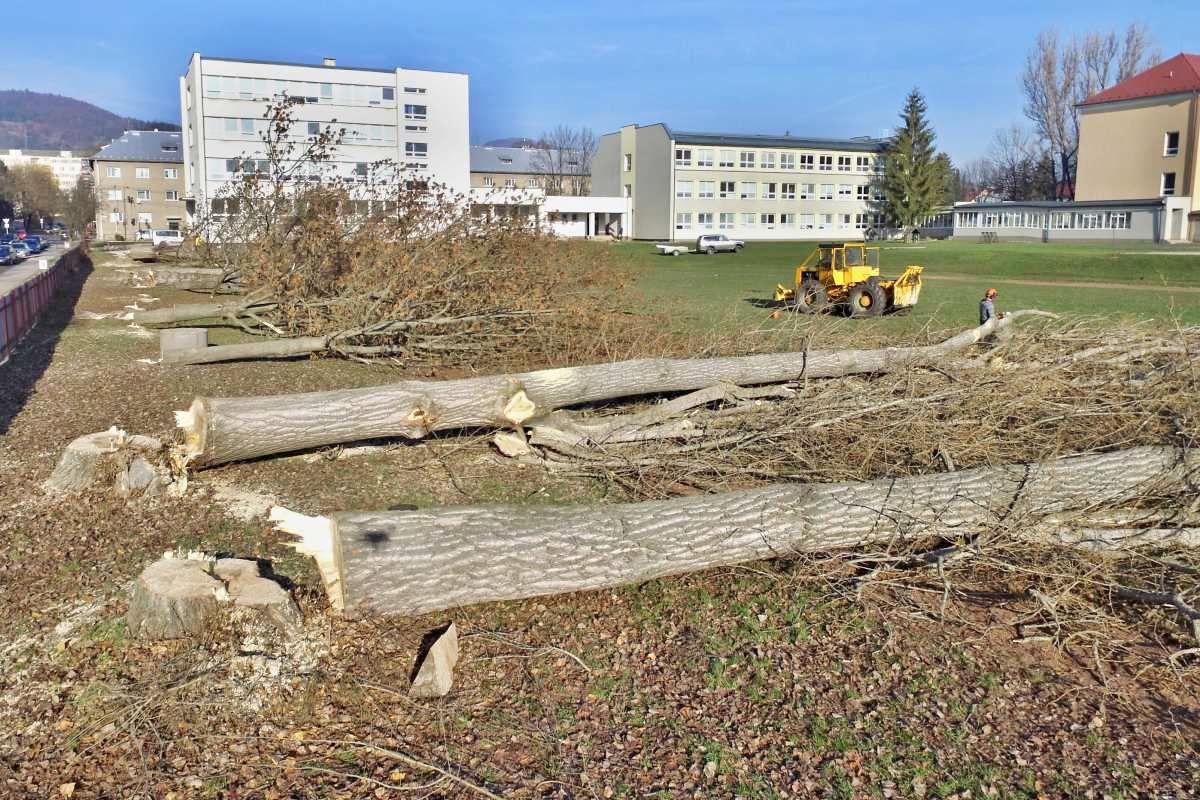 obr: Stromy, ktoré padli za atletickú dráhu, nahradia novou zeleňou
