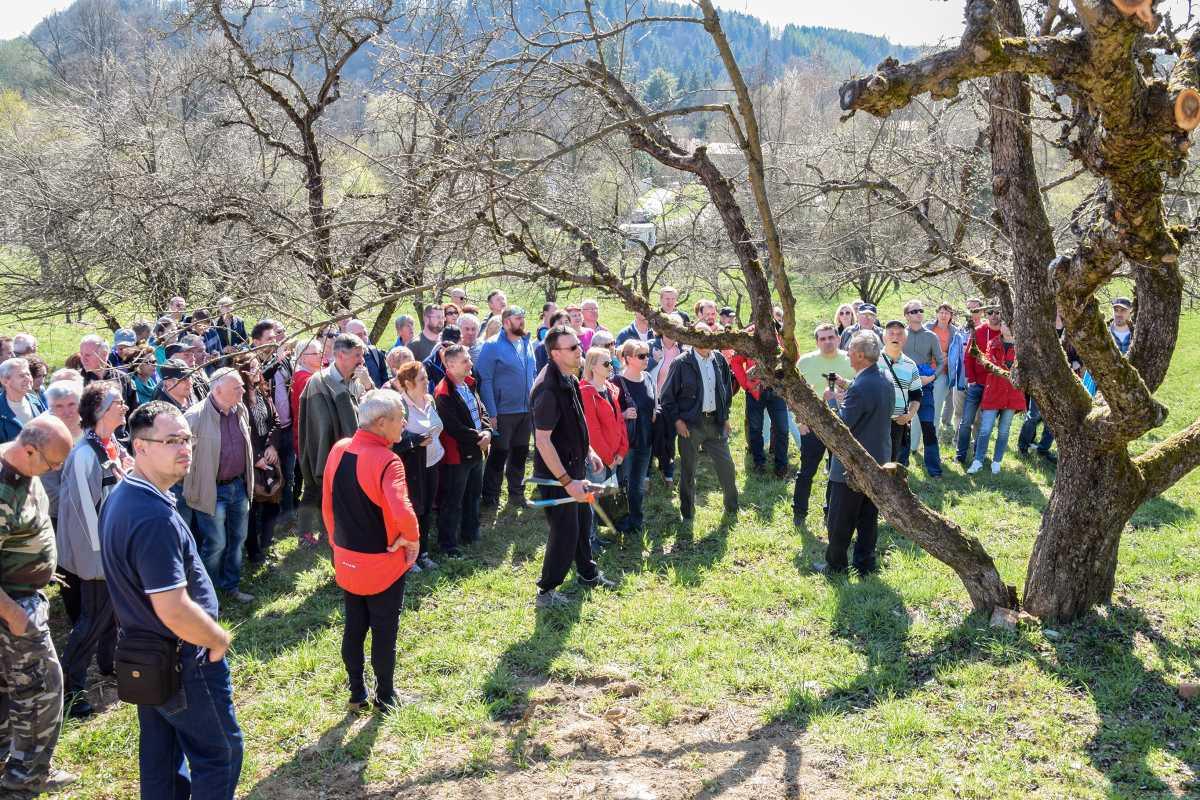 obr: V ovocnom sade na Banisku privítali vzácnu návštevu, profesora Hričovského