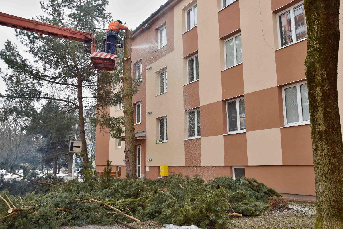 obr: Výrub drevín v meste je v plnom prúde. Obdobie vegetačného pokoja pomaly končí