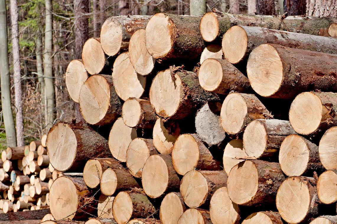 obr: Nové zistenie o hospodárení mestských lesov, podané boli aj trestné oznámenia