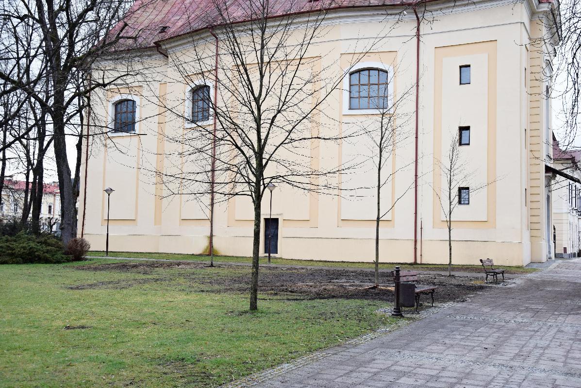 obr: Dve odstránené lipy v mestskom parku už nahradili výsadbou troch nových líp