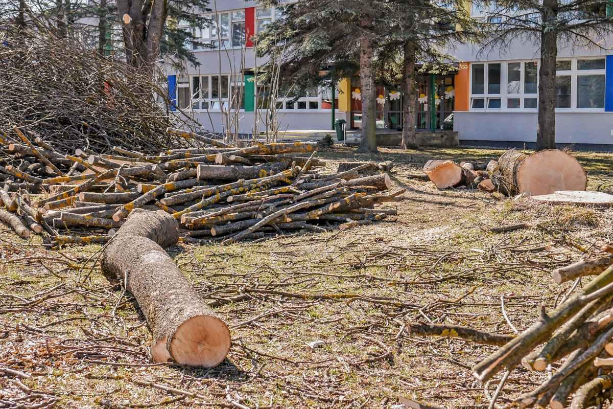 obr: V Brezne dočasne pozastavili výrub drevín. Verejnosti sa nepáčil rapídny úbytok zelene