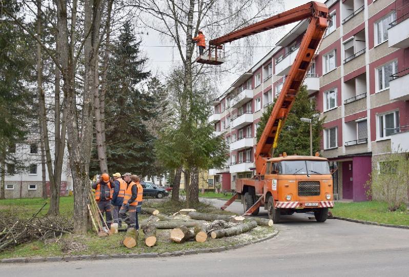 Technické služby začnú svýrubom drevín po nadobudnutí právoplatnosti rozhodnutí