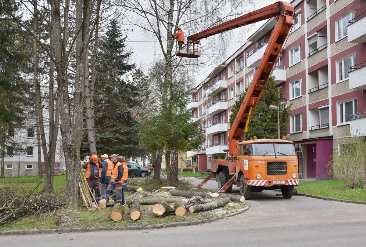 obr: Technické služby začnú svýrubom drevín po nadobudnutí právoplatnosti rozhodnutí