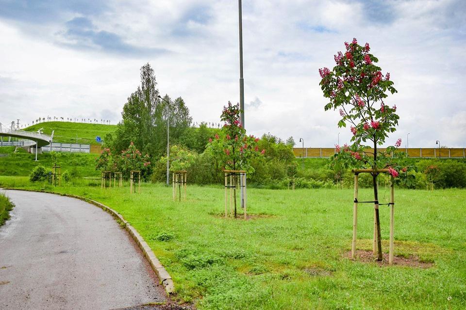 V Brezne vysadili 170 listnatých stromov